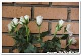 paasvakantie_2012_598_20120419_2003409924.jpg