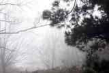 Kissing trees