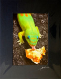 Gecko eating pastry - Fire and ice (Sinful lick) - detailed size.jpg