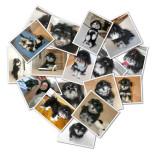 Ricky Shape Collage