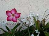 Flowers in my sister's entryway
