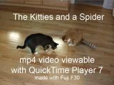 Kitties and Spider Video.