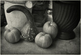 Having a Gourd Time