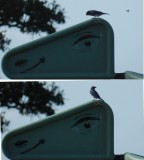 Bluebird and Wasp Ft Monroe Nov 2012.JPG