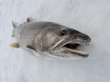 2011/12/13  fish pics