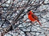 Snow Bird 2012