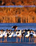 Golden Hourt on a Winter Marsh