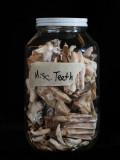 Miscellaneous Teeth