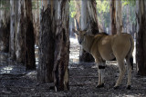 Tranquility at Safari Park.jpg