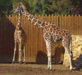 A mother's love at Safari Park