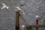 Pecking Order.jpg