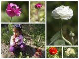 Flowers and Strawberries at Mishmar Hasharon.jpg