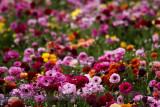 Spring Splash of Colours.jpg