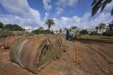 New Grass in Kikar Hamedina.jpg