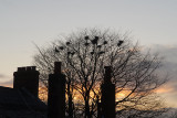 Rookery Sunset.