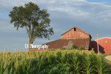 Golden Crop and Barn