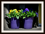 Two Purple Pots