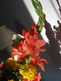 Shadows & Flowers