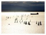 Sailboat Regatta on Elliot Bay at Sunset