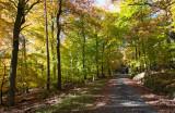 Taunus (Autumn 2012)