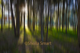Trees with motion blur