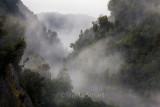 Mist in trees at Franz Josef
