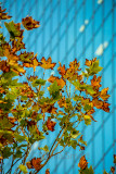 Autumn leaves with window backdrop