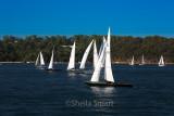 Sydney Harbour yacht race