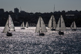 Downwind yacht race on Sydney Harbour