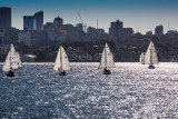 Four yachts sailing downwind on Sydney Harbour