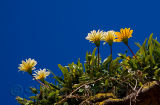 Flowers above rockface