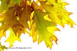 More Autumn Leaf Colour