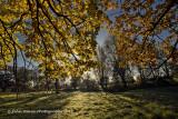 Autumn Under The Old Oak Tree