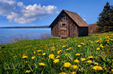 110.2 - Duluth:  Old Fish House With Spring Dandelions