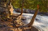 18 - Gooseberry River: Sunny Morning Cedars