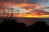 dawn in Whangaparaoa III