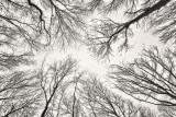 308, Tall Trees, Marshlands Conservancy, Rye
