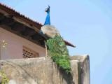 Pullum (Birds) Allar PazhaNangalum Soozhundha Pullaniyea !.JPG