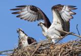 osprey 56