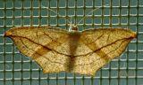 Moth On Screen Door