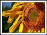 aug 31 bee