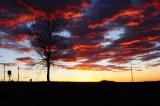 Vivid Sunset with Tree