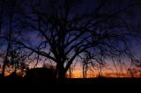Sunrise Silhouette Purple Phase