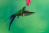Hummingbirds at Sachatamia Lodge and Mindo