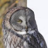 Oiseaux Janvier-Février 2013
