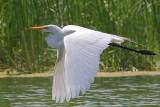 Oiseaux Juin-Juillet 2011