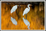 Egrets On Fire