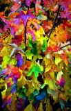 fall colors, Washington
