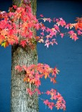 fall colors Seattle Washington