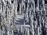pristine path, Mt Persis, Cascade Mountains, Wahington, PNW